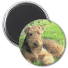 Runder Magnet Airedales Terrier