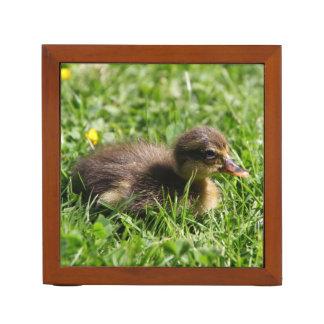 Running duckling2
