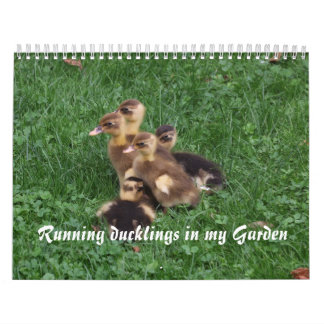 Running Ducklings in my garden Abreißkalender