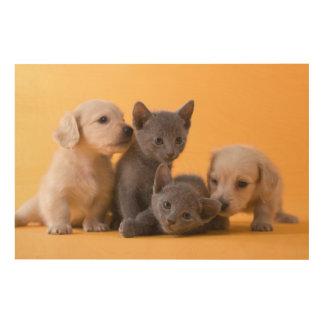 Russische blaue Kätzchen u. Dackel-Welpen Holzwanddeko