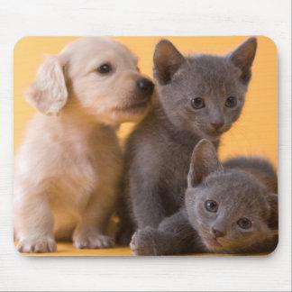 Russische blaue Kätzchen u. Dackel-Welpen Mousepad