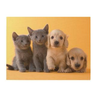 Russische blaue Kätzchen und Dackel-Welpen Holzleinwand