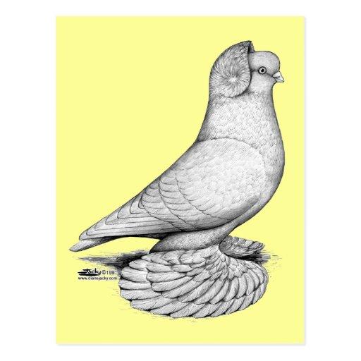 Russische Trommel-Taube Postkarten