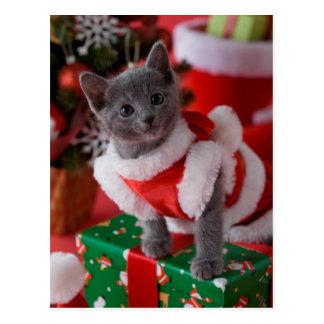 Russisches blaues Kätzchen und Weihnachten 2 Postkarte