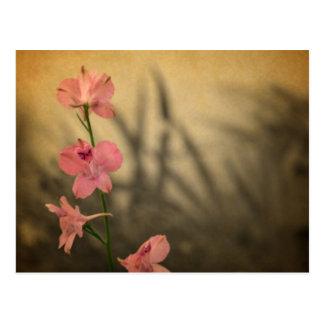 rustikale Landgartenrosa-Blumen-Wildblume Postkarte
