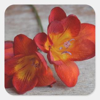 Rustikale orange Freesia-Blumen-Aufkleber Quadratischer Aufkleber
