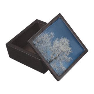 Rustikale Schneeszenen-Winterbäume des blauen Kiste