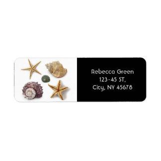 rustikaler Küstenstrand schicke Seashell Starfish