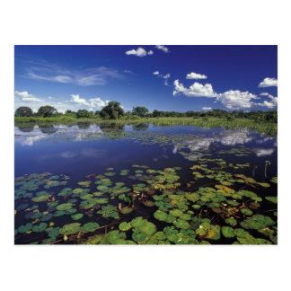 S.A., Brasilien, Wasserstraßen in Pantanal Postkarte