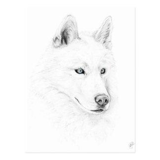 Säbel ein sibirischer Schlittenhund, der Postkarte