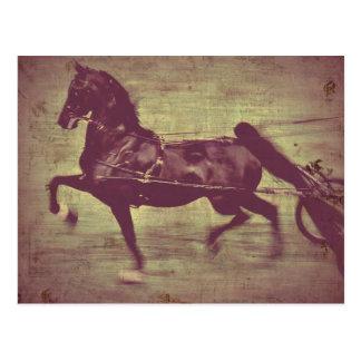 Saddlebred Lied Postkarte