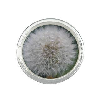 Säen des Löwenzahn-Blumen-Ringes Ring