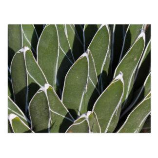 saftige Pflanze im Garten Postkarte