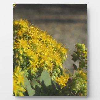 Saftige Pflanze mit gelben Blumen Fotoplatte