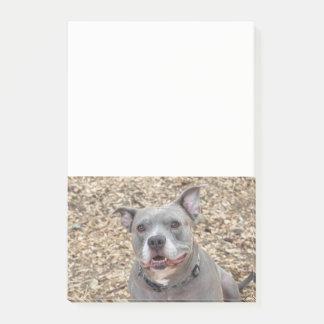 Sagen Sie KÄSE lächelnde Pitbull Anmerkungen Post-it Klebezettel
