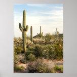 Saguaro-Kaktus, Arizona, USA Poster