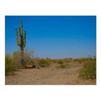 Saguaro-Kaktus auf einsamer Wüsten-Straße Postkarte