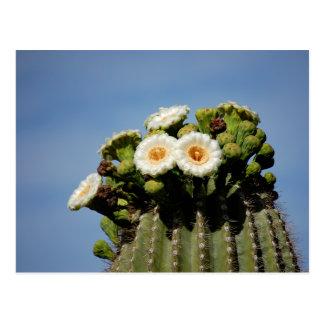 Saguaro-Kaktus-Blüten Postkarte