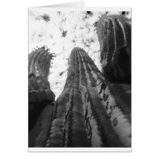 Saguaro-Kaktus, Infrarotphotographie Karte