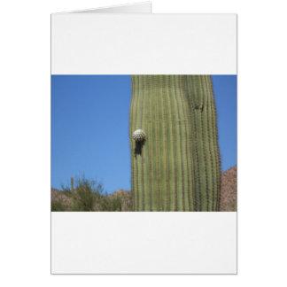 Saguaro-Knospe Karte