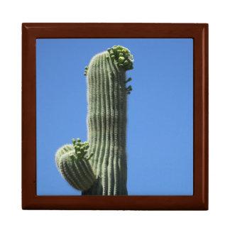 Saguaro-Spitze Geschenkbox