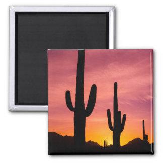 Saguarokaktus am Sonnenaufgang, Arizona Quadratischer Magnet