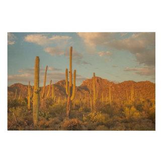 Saguarokaktus am Sonnenuntergang, Arizona Holzdruck