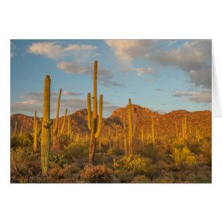Saguarokaktus am Sonnenuntergang, Arizona Karte