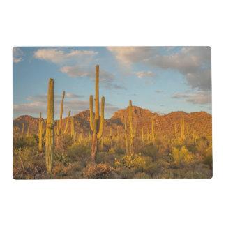 Saguarokaktus am Sonnenuntergang, Arizona Laminiertes Tischset