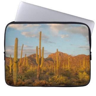 Saguarokaktus am Sonnenuntergang, Arizona Laptopschutzhülle