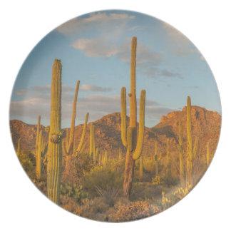 Saguarokaktus am Sonnenuntergang, Arizona Teller