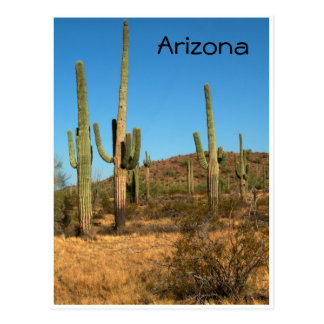 Saguarokaktus, Arizona - Postkarte