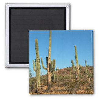 Saguarokaktus Quadratischer Magnet