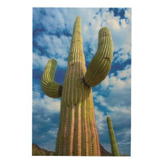 Saguarokaktusporträt, Arizona Holzleinwand