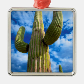 Saguarokaktusporträt, Arizona Quadratisches Silberfarbenes Ornament