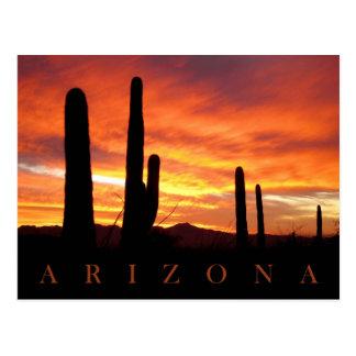 Saguaros silhouettiert gegen glühenden postkarte