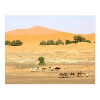 Sahara-Wüste - Kamele und Erg Chebbi Postkarte