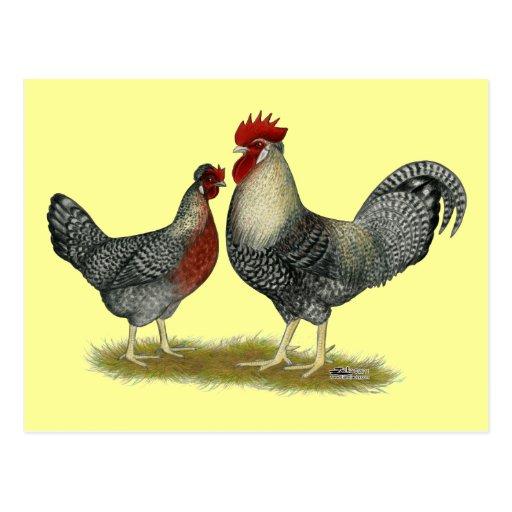 SahneLegbar Hühner Postkarten