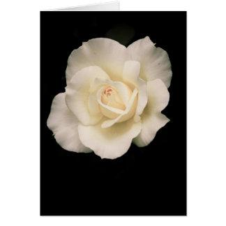 Sahnige Rose Karte