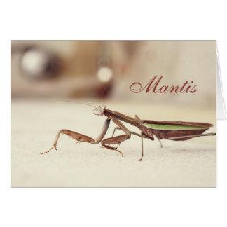 Sahniger betender Mantis Karte