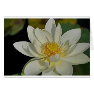 Sahniges Wasser Lily.JPG Karte
