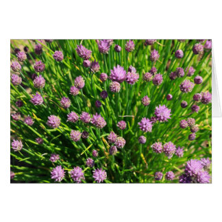 Salat-Zwiebel, die mit lila Blüten blüht Karte