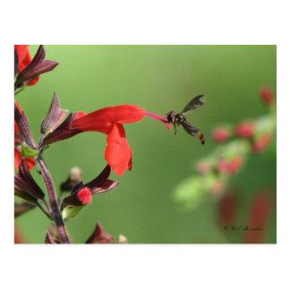 Salvia u. gebürtige Bienen-Postkarte Postkarte