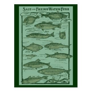Salz-und Süßwasserfisch-Diagramm Postkarte