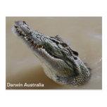 Salzwasser Krokodil Darwin Australien Postkarte