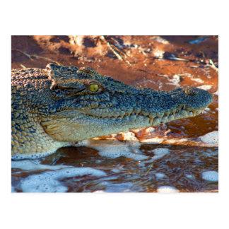 Salzwasser-Krokodil Postkarte