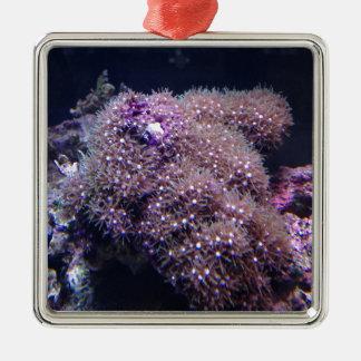 Salzwasser-Livefelsen Quadratisches Silberfarbenes Ornament