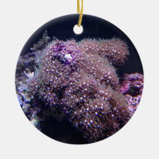 Salzwasser-Livefelsen Rundes Keramik Ornament