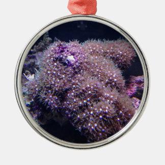 Salzwasser-Livefelsen Silbernes Ornament