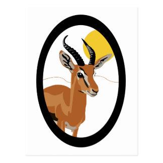 Samer die Gazelle - lang Postkarte